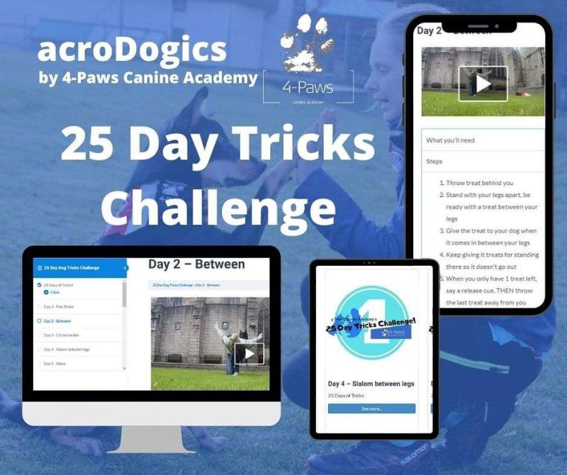 dog tricks course