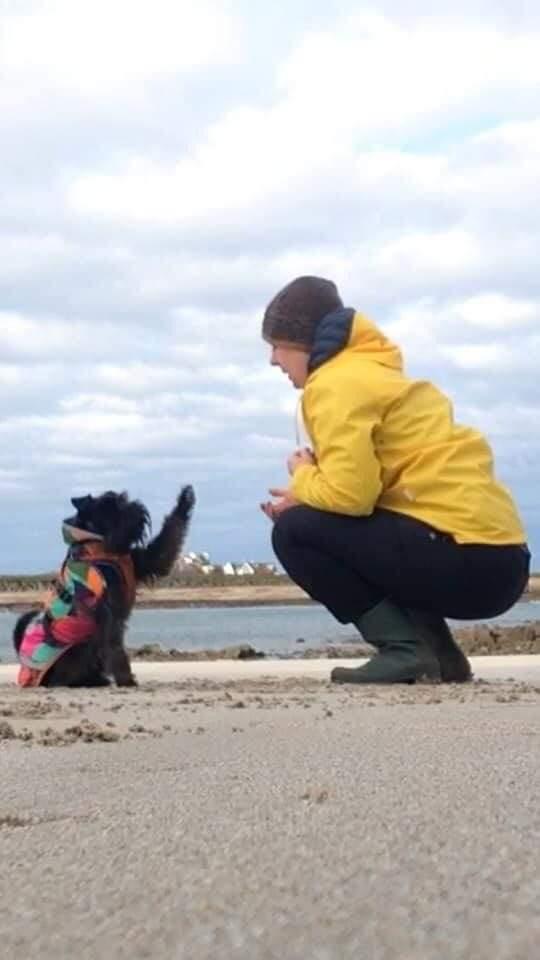 bingo dog tricks title holder at 4-Paws Canine Academy
