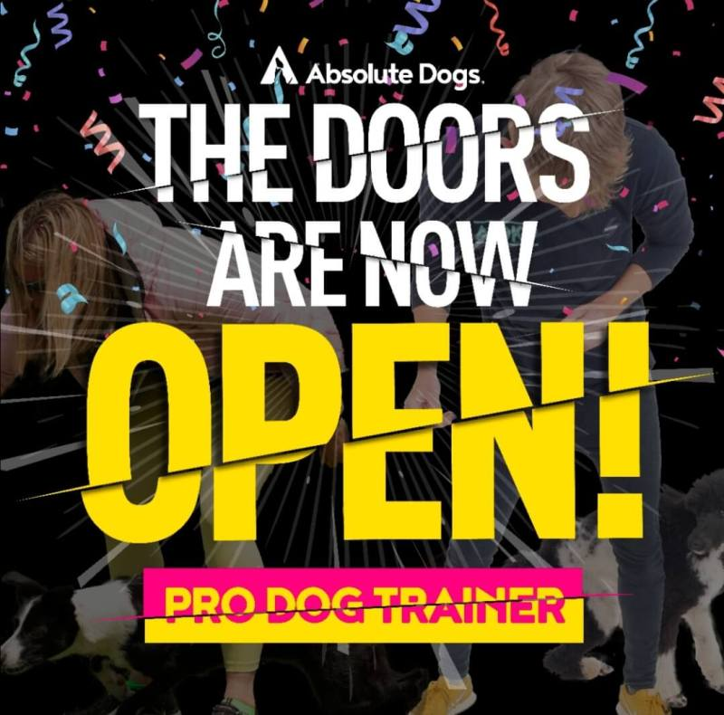 Pro dog trainer (pdt) course by absoluteDogs