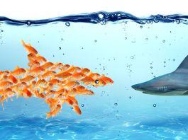 Ein Hai und viele Goldfische