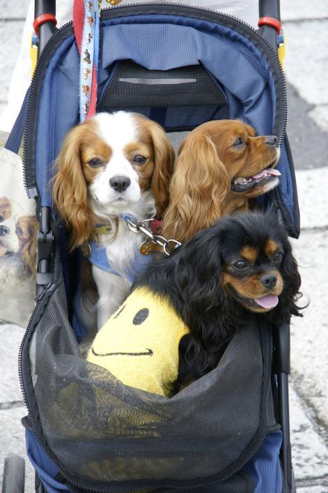 Trolley mit kleinem Hund