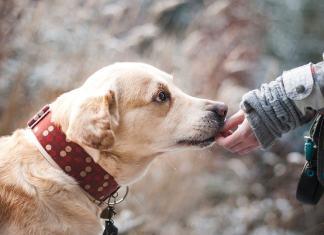 Mensch mit Labrador
