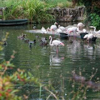 Flamingo och sjöfåglar i parken