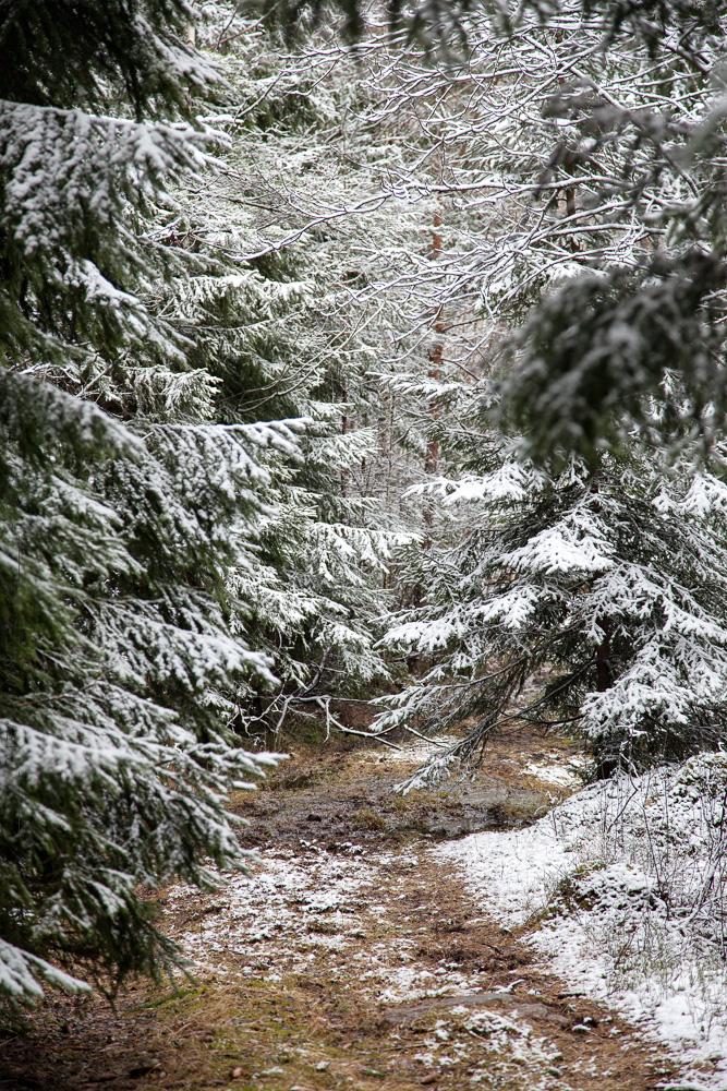 Skogen en snöig dag