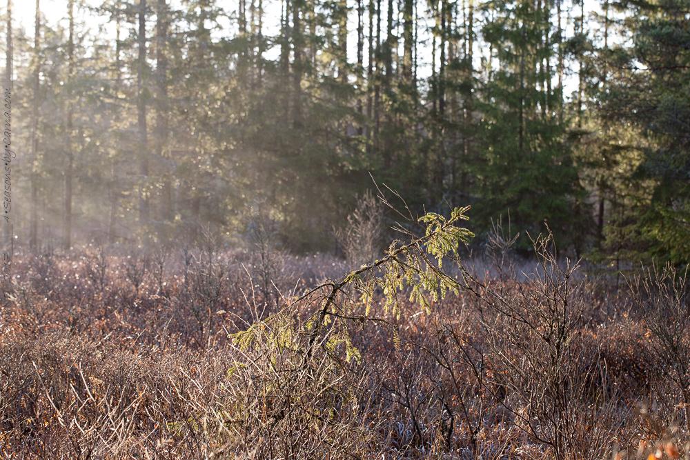 December - Färdsleskogen