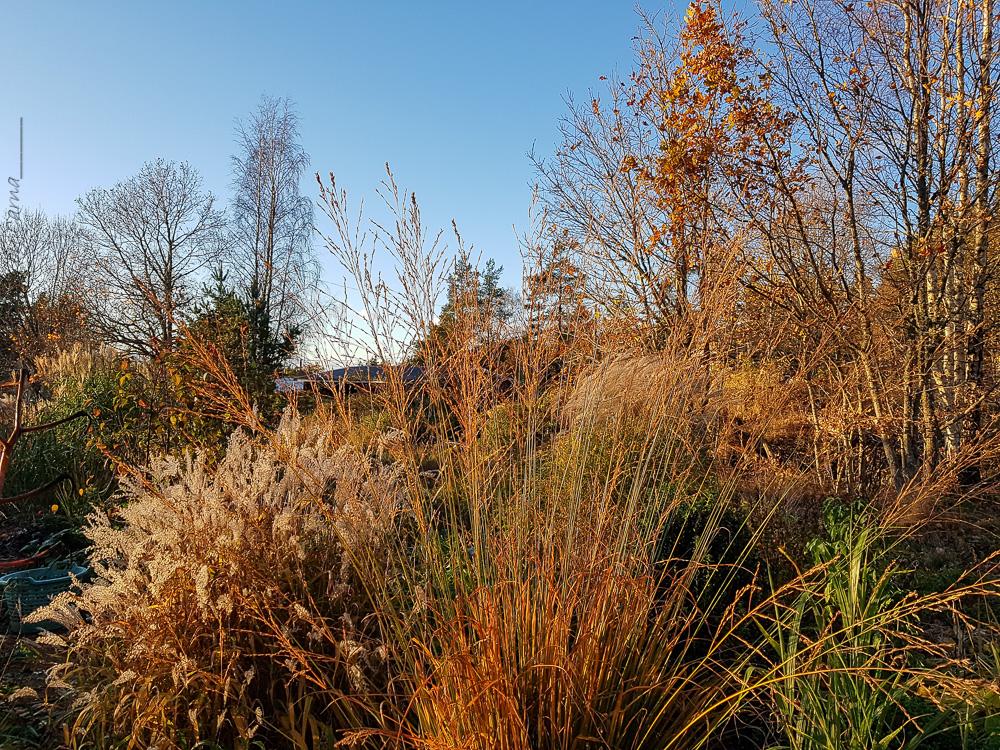 November börjar med sol