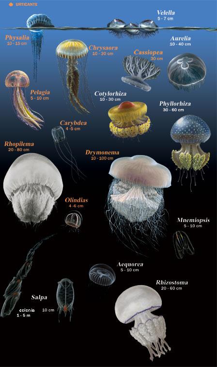 meduse, 4sub, consigli