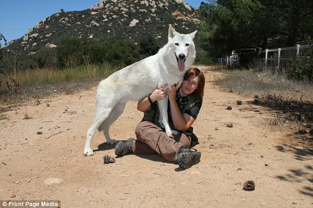 Into the wild: Damu is 90 pounds, but acts as if he's just a puppy while he jumps and climbs on Kimmi