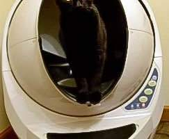 What's The Best Litter Box Out There?