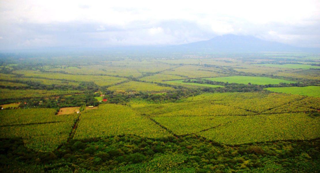 Transformación productiva del país, el caso del sector forestal