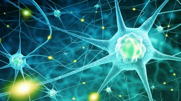 CBD and the Brain: What Does It Do and What Is It Good For?