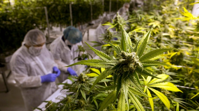 Cannabis Industry expected to deliver 340,000 full-time jobs by 2022