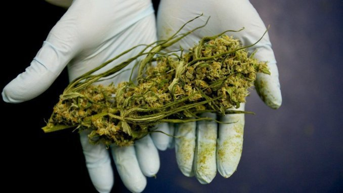 Cancer Institute Finally Admits Marijuana Kills Cancer