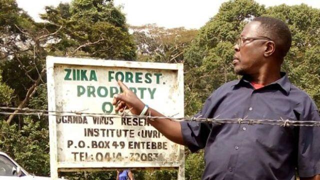 ZIKA BOSQUE ORIGINAL AFRICA