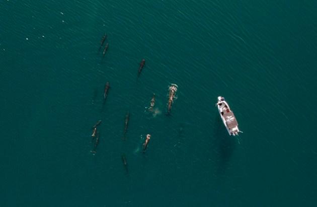 Ballenas piloto (Foto: Geraldine Busquets y Mario Pardo).