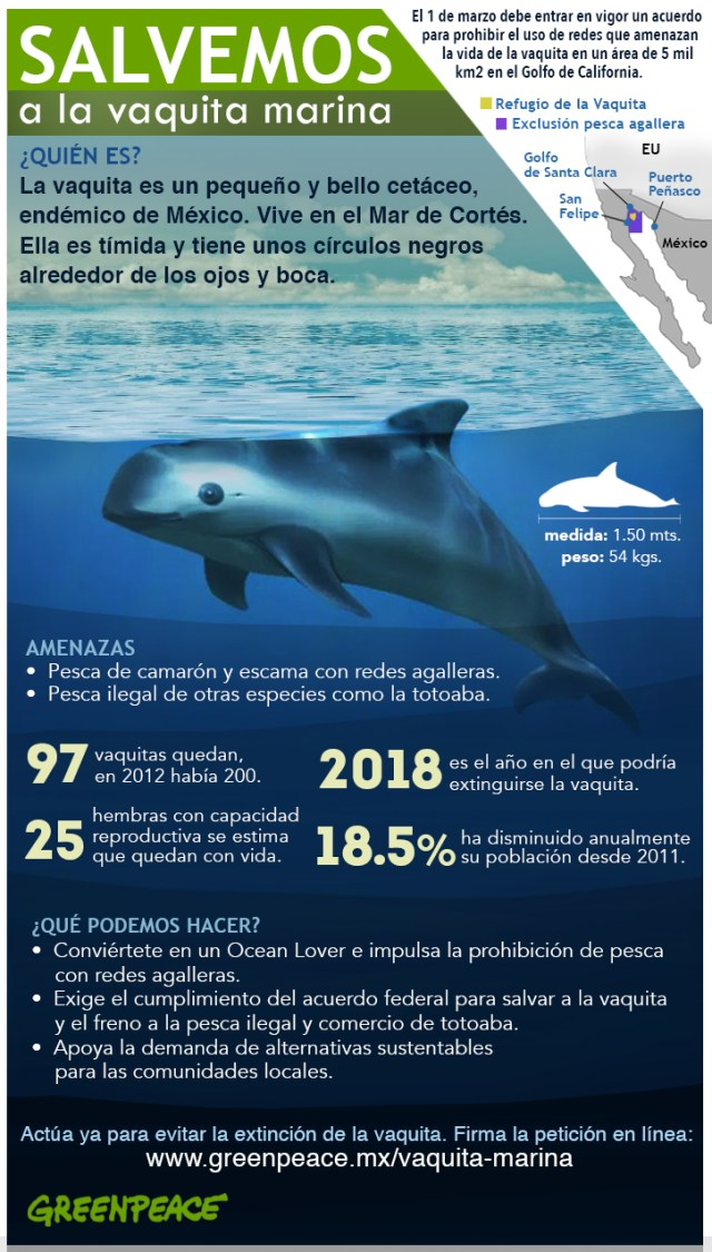 vaquita-marina-greenpeace-infografia