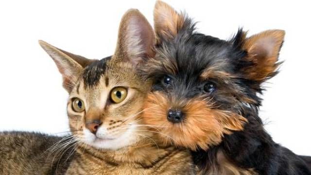 perro-gato-mascotas-getty_claima20150320_6411_27