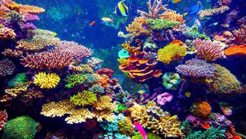 arrecife-coral-qr