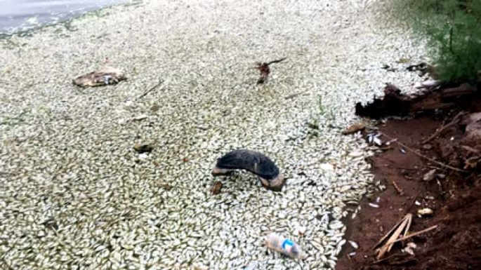 Los peces de Mexicali murieron asfixiados; van 3 años que pasa lo mismo (Video)
