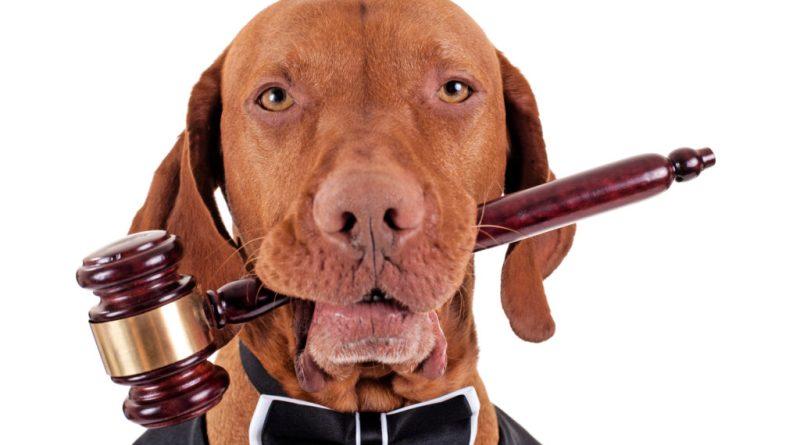 """DANZAR HASTA QUE LLUEVA: O… """"Los Perros Guardianes de la Constitución"""""""
