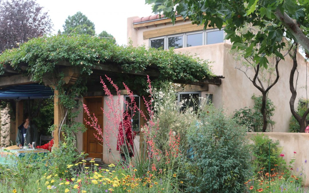 Creating living shade with vines