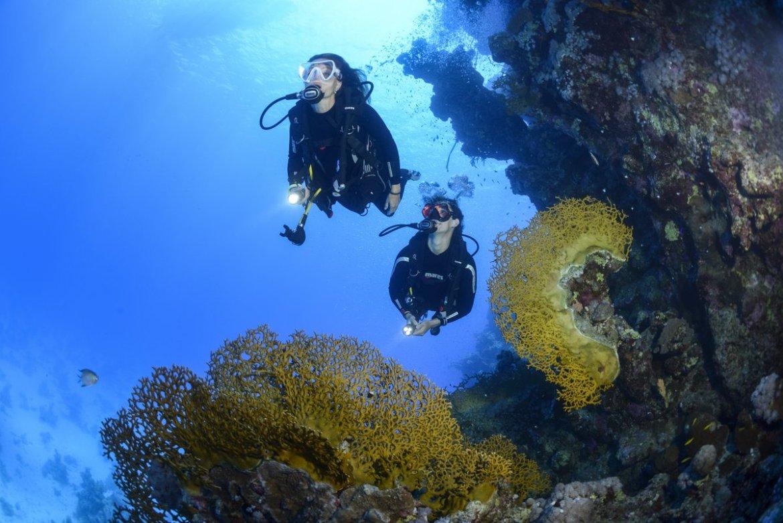 Scuba Introduction Dive
