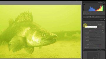 Color Correction Underwater Photo's