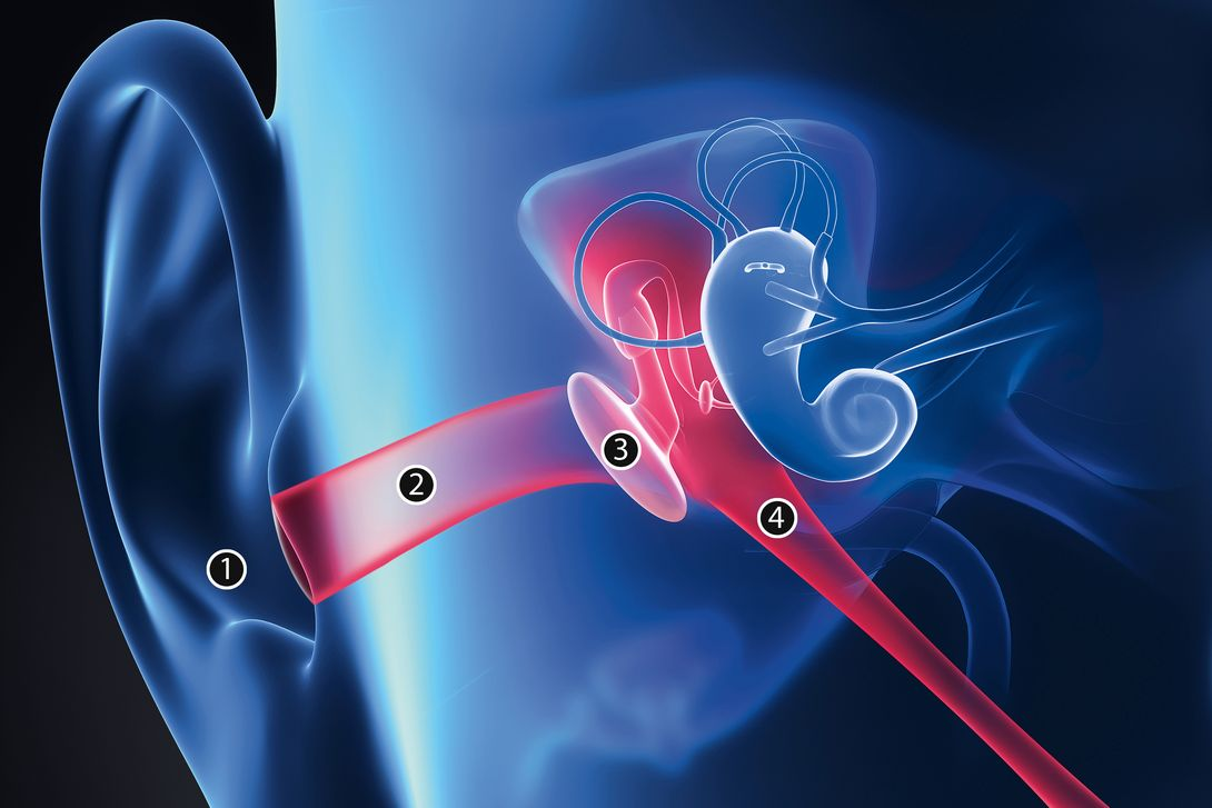 First your ear | What happens inside your ears