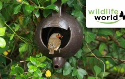 wildlife world, save garden birds this winter