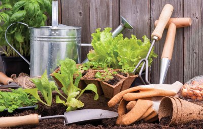 easy guide starting own allotment
