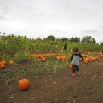 Favorite East Bay Pumpkin Patches