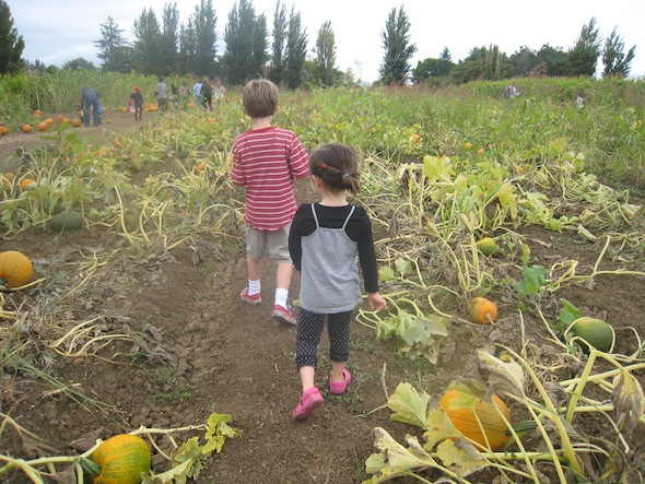 Favorite East Bay Pumpkin Patches: Smith Valley Farm