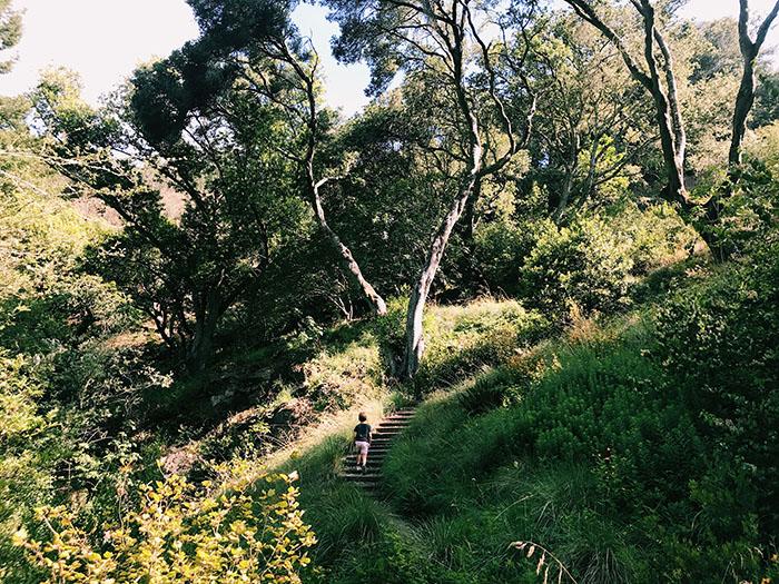 Botanical Garden Steps