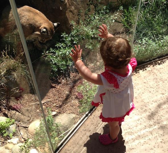 Palo Alto Jr Museum and Zoo