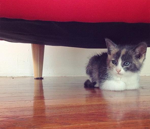 Foster Kitten from Oakland shelter