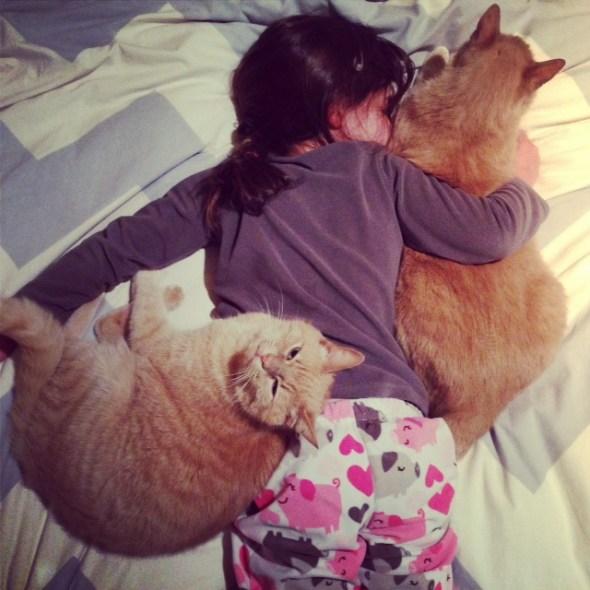 scarlett-cats