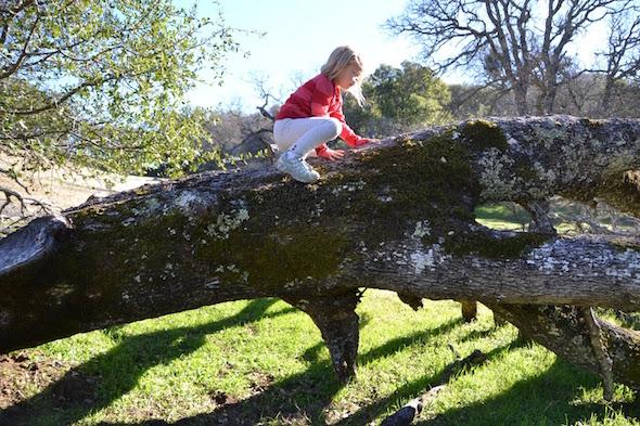Morgan Territory climb a tree