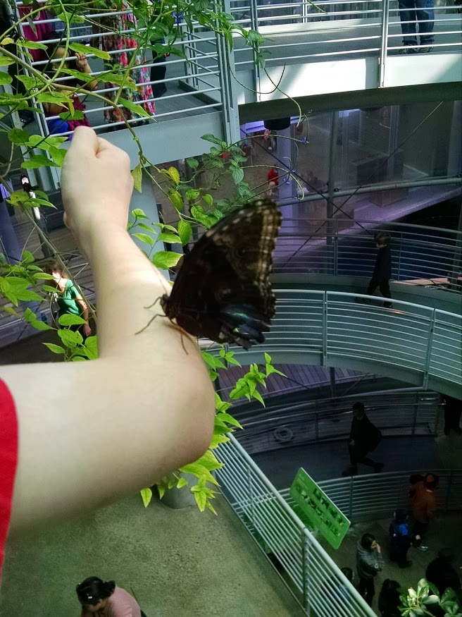 Cal Academy rainforest room