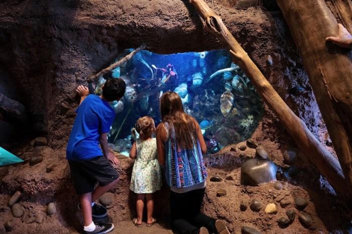 Turtle Bay Museum Salt Water Tank