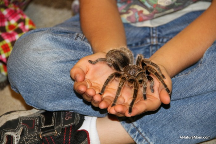 Child holding a tarantula at Sulphur Creek Hayward