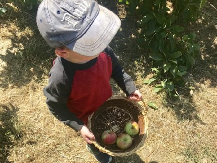 Apple picking at Chileno Valley Ranch