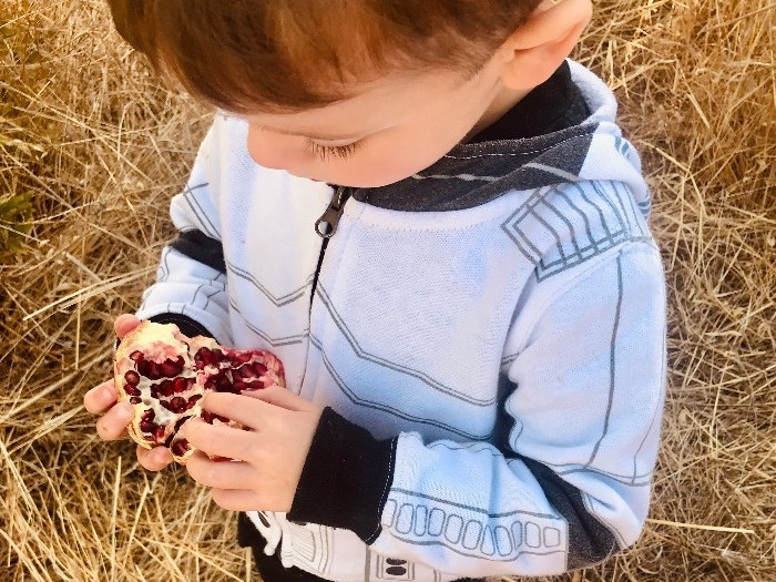 child eating pomegranate on the farm