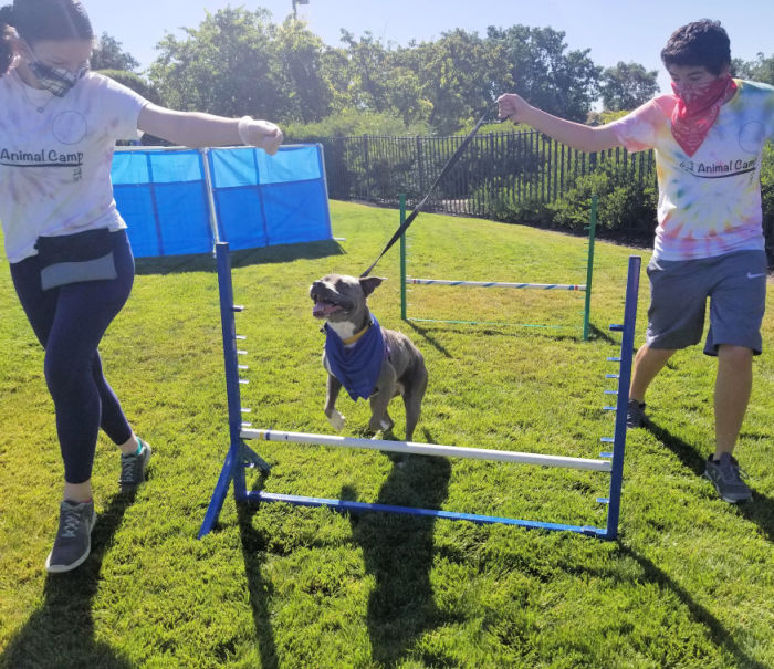 SPCA campers training a dog