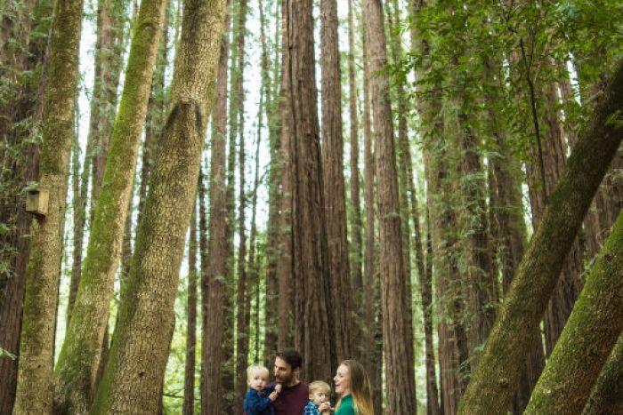 redwoods family 700