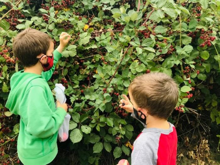 Berry-Picking-Gabriel-Farm