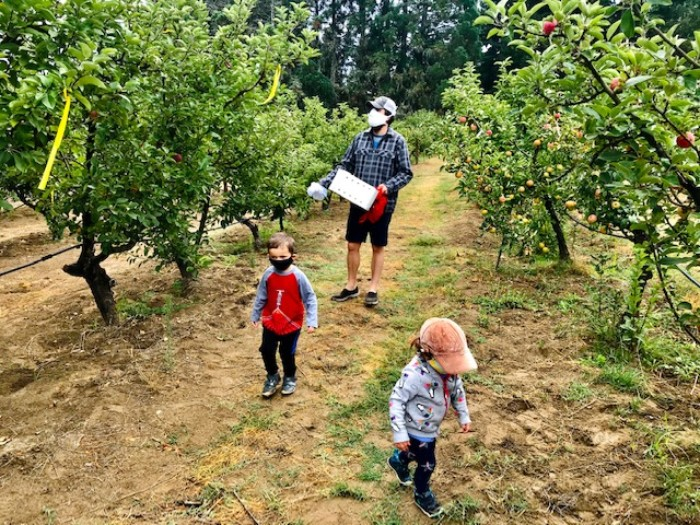 Gabriel-Farm-Apple-Picking