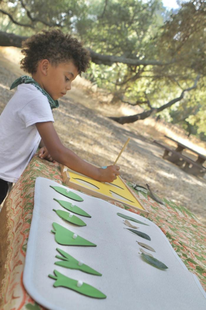 Leaf Classification for Kids