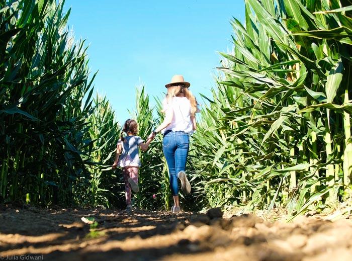 G&S corn maze
