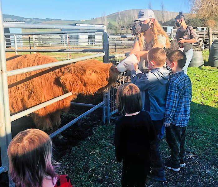 children bottle feeding a furry cow
