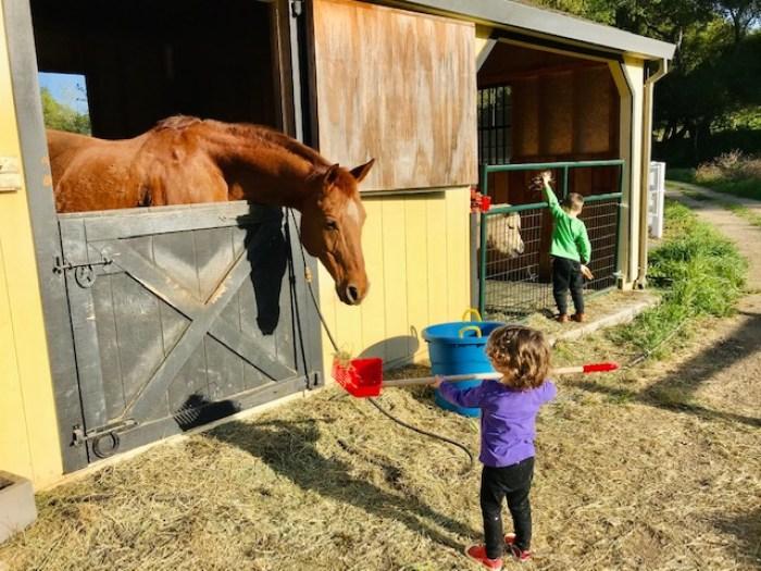 Heirloom Acres Farm Horses